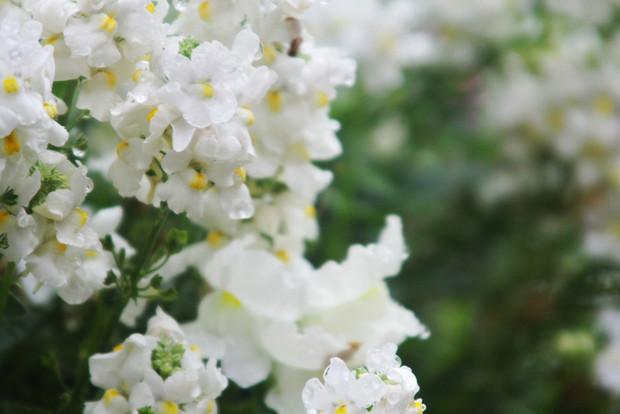 Spring: Season of Renewal and Growth