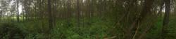 Surveying through the Bush