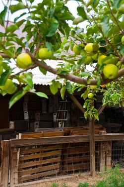 apple orchard barn 2