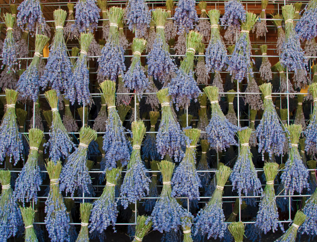 Drying lavender buldles