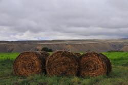 Cedaredge haybales