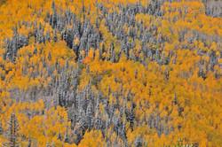 Powdered sugar forest