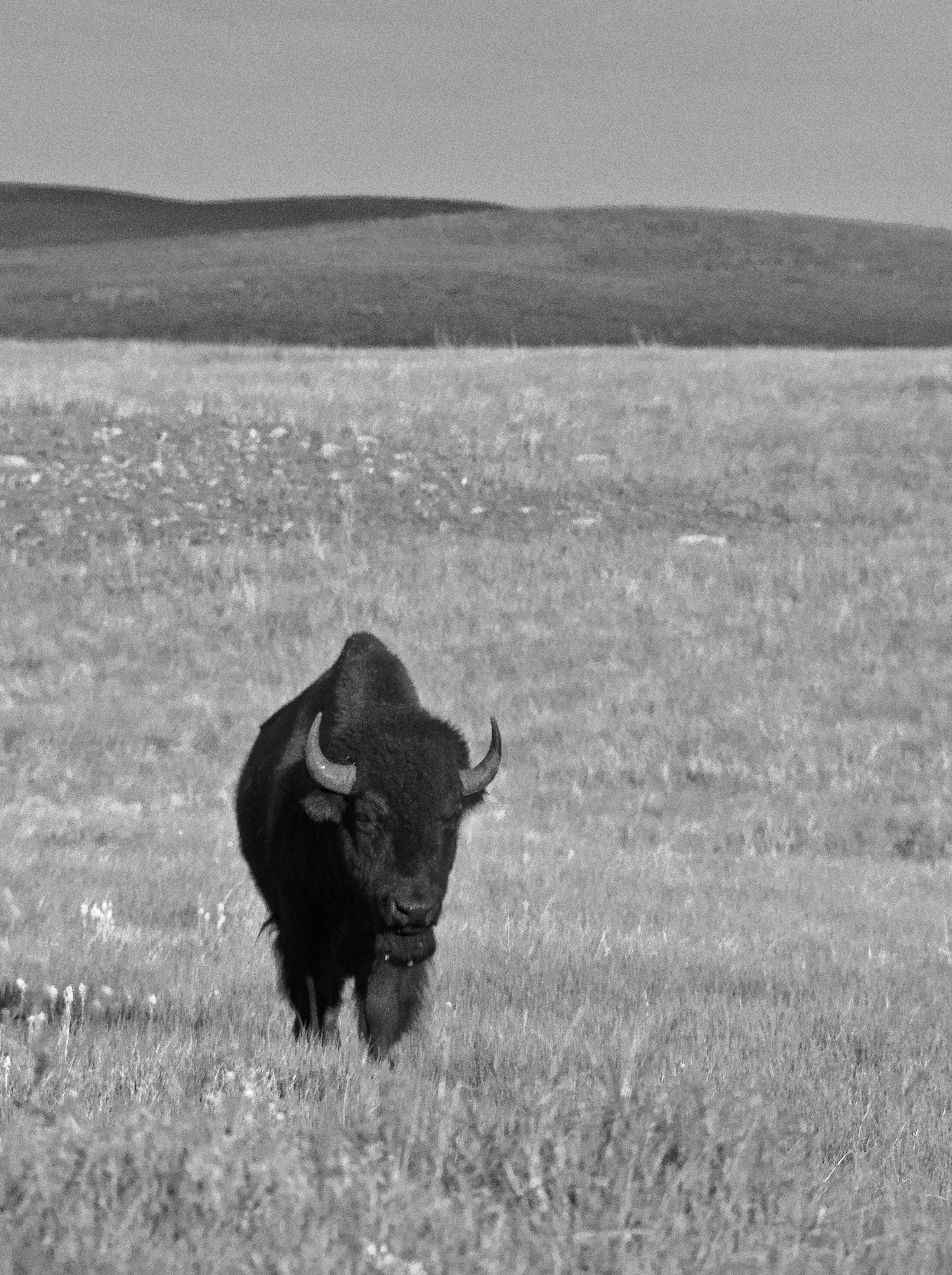 Grand Dad Buffalo