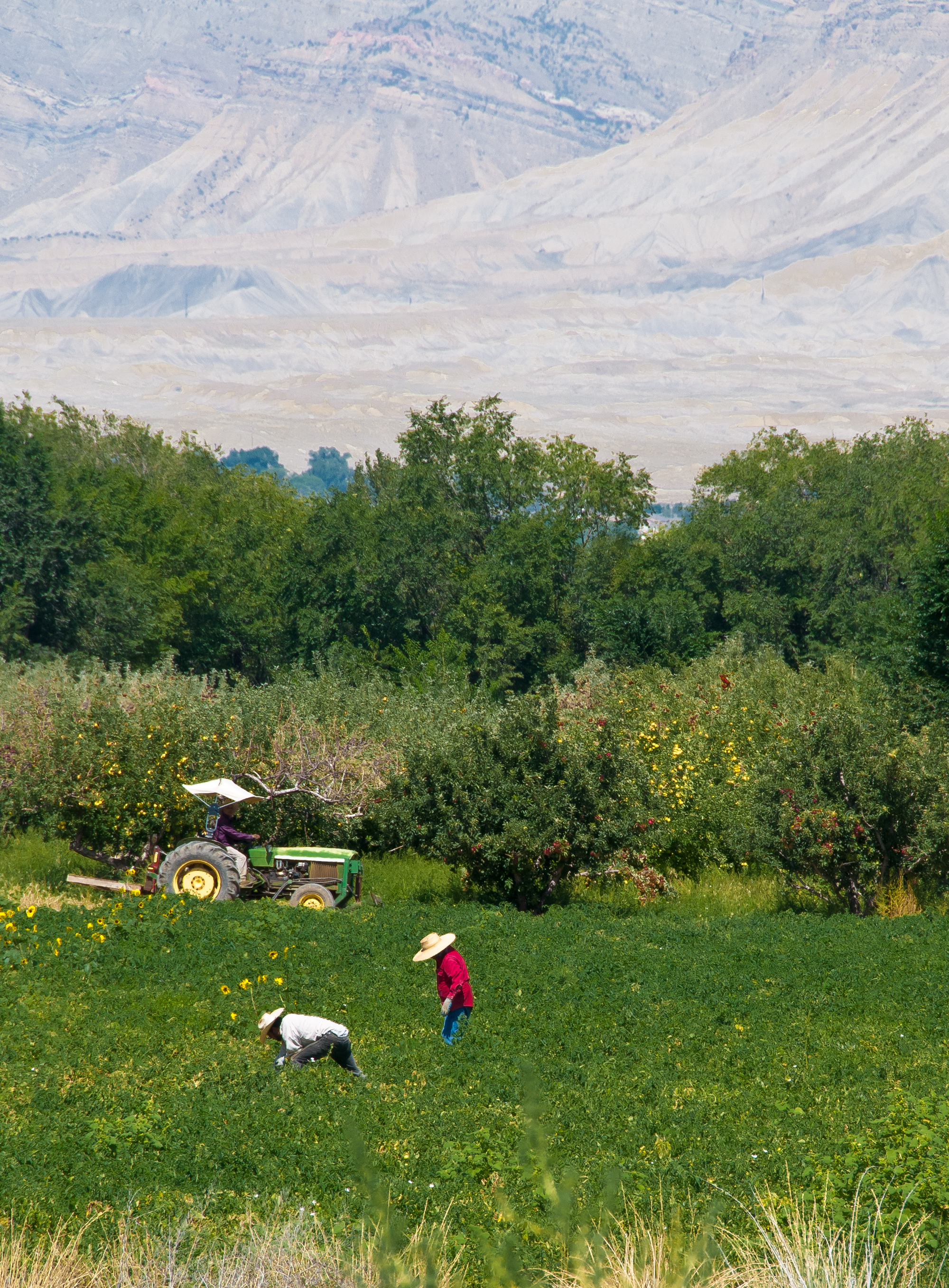 workers picking