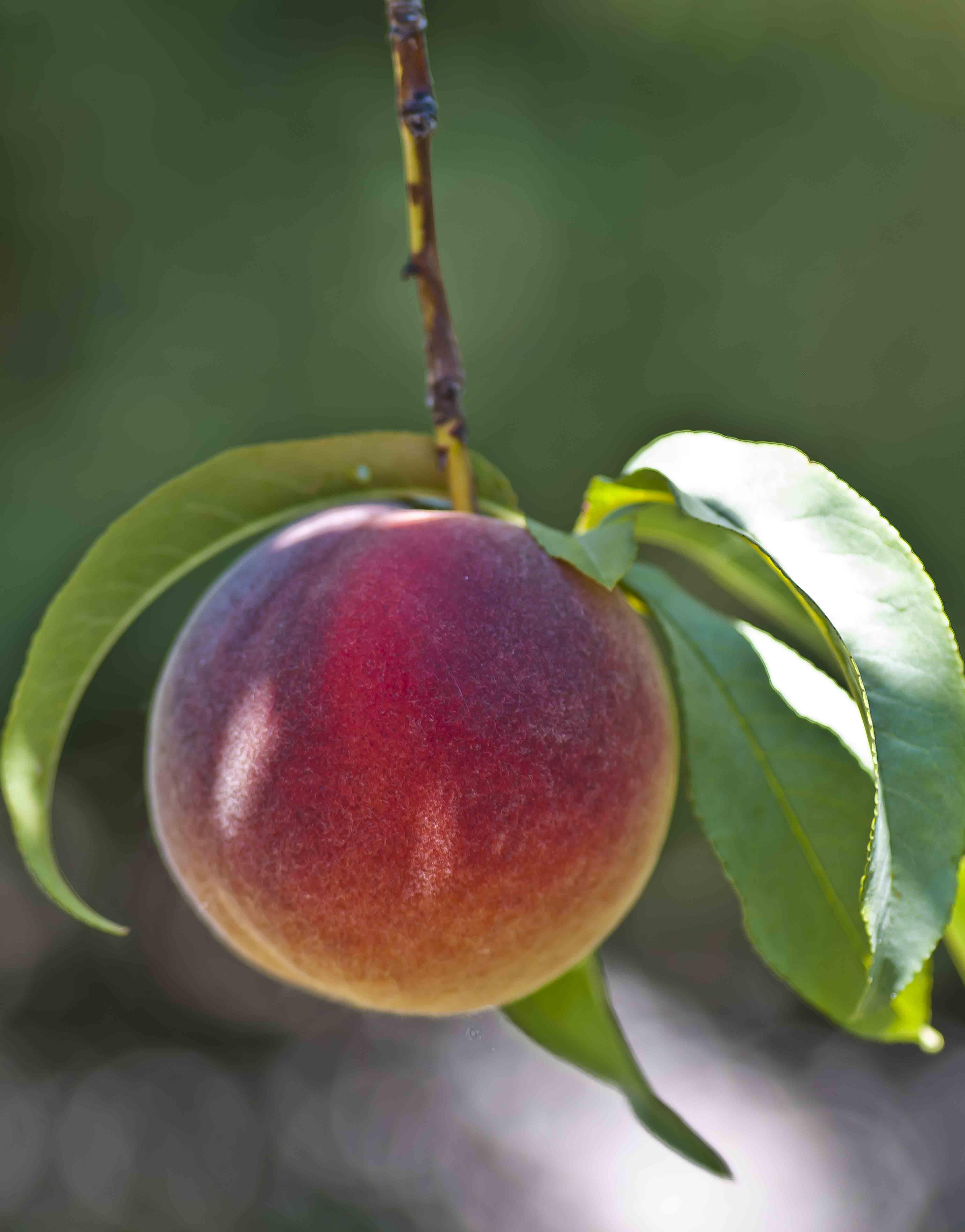 Ain't that a peach