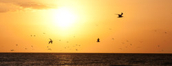 Terns and gulls in flight AnnaMariaIslandFla 2016036