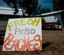 Peach sign