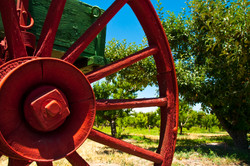 Old wagon and apple trees