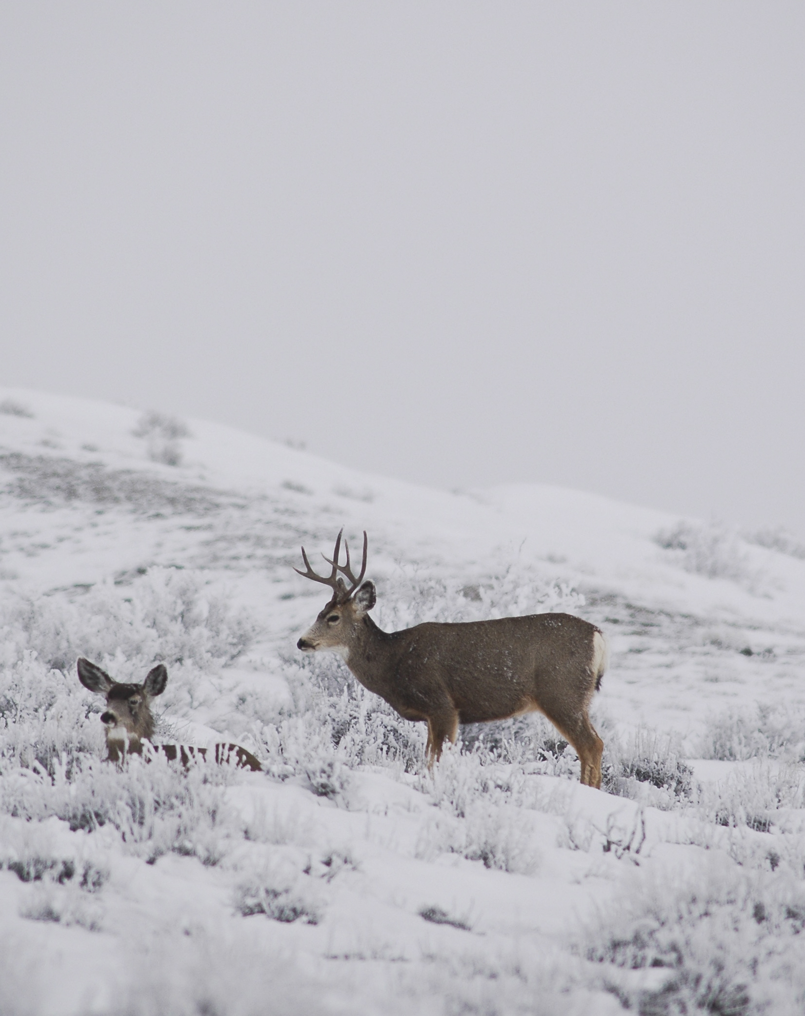 Muley couple