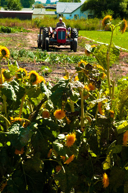 sunflower tractor