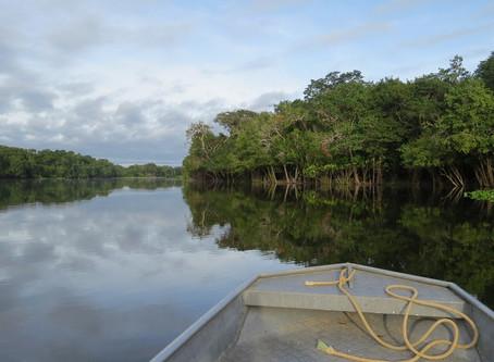 Blockchainização, uma estratégia para salvar a Amazônia