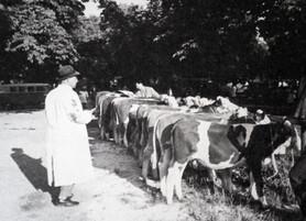 """27.3.2019 19.30Uhr Vortrag: """"Jüdische Viehhändler in Süddeutschland"""" Dr. Fredy Kahn, Tübin"""