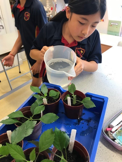 year 6 Science