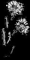 flower 2_edited.png
