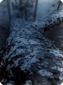 ANATOMY XXII  X-Ray film 42X35 Cm.