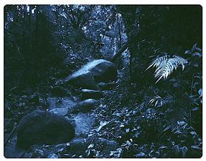 ANATOMY XIII  X-Ray film 42X35 Cm.