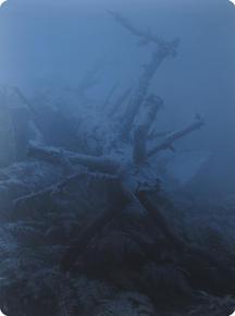 ANATOMY XXIV  X-Ray film 42X35 Cm.