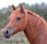 11364263_web1_180413-KIR-HorseM.jpg