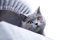 ILFC cats_0200