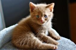 almiras kitten (24)