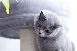 ILFC cats_0119