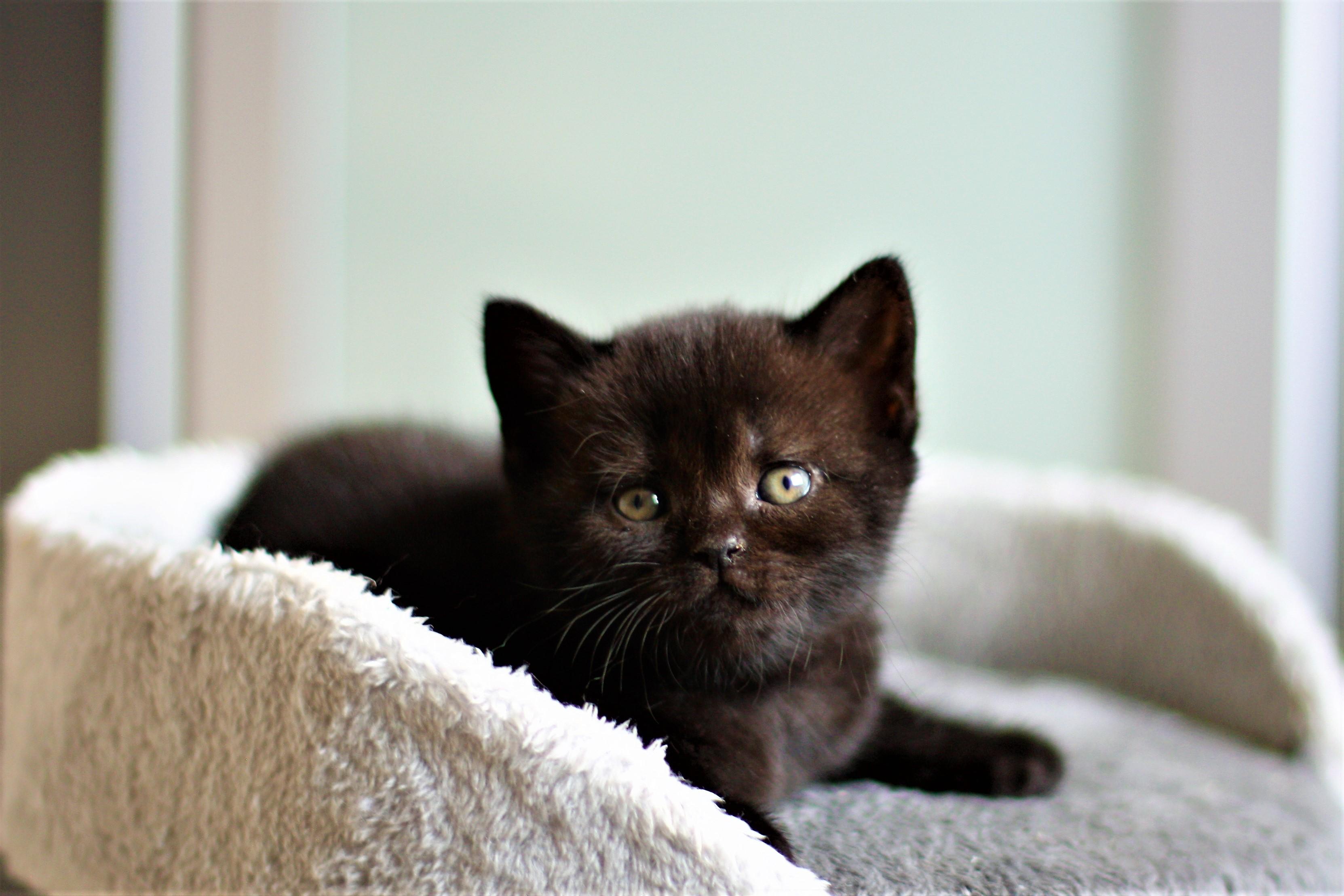 almiras kitten (8)