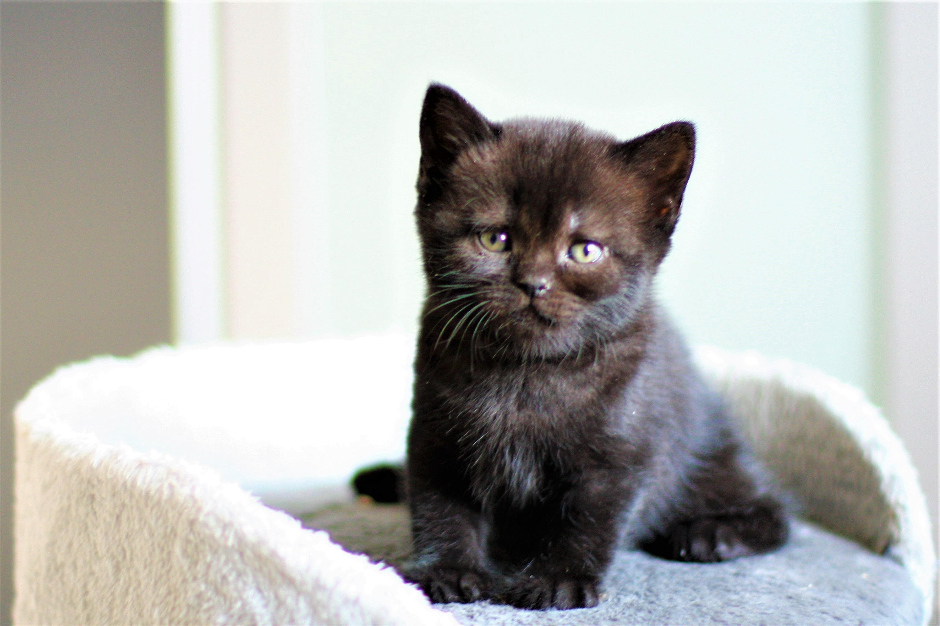 almiras kitten (1)