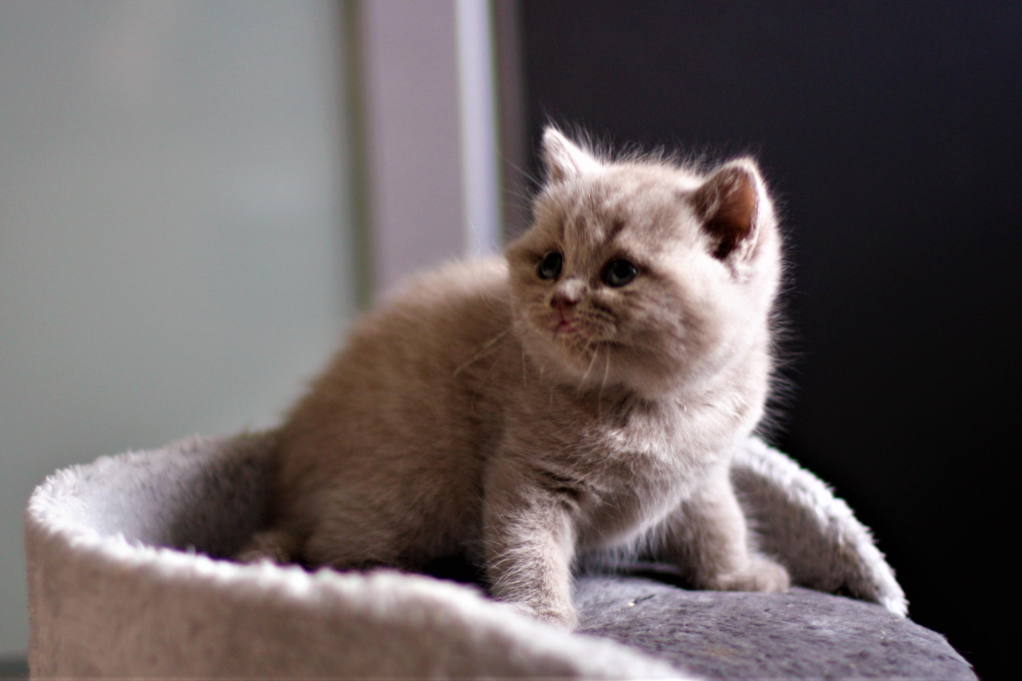 almiras kitten (15)