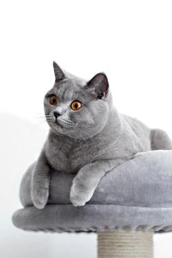 ILFC cats_0476