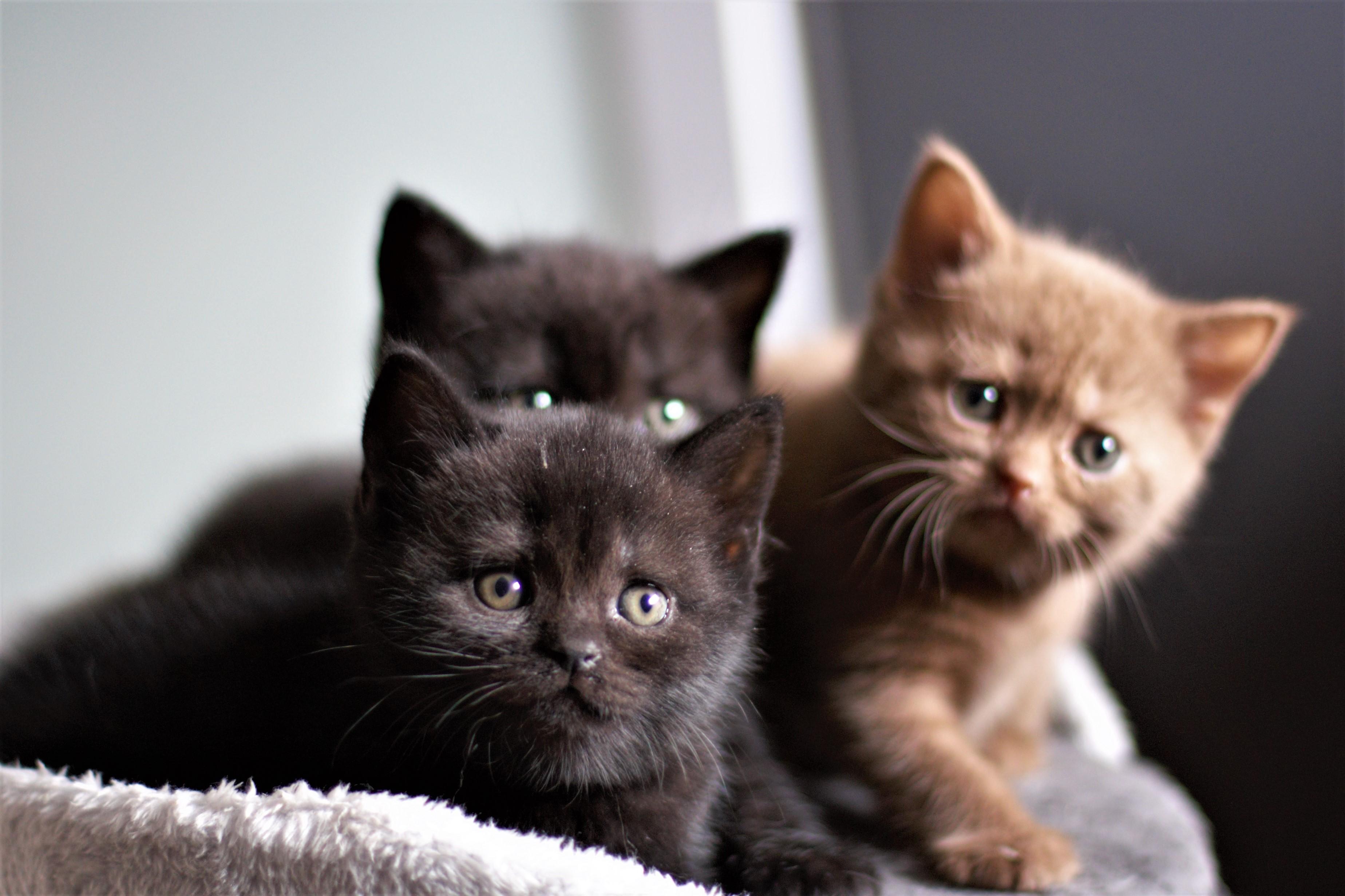 almiras kitten (26)