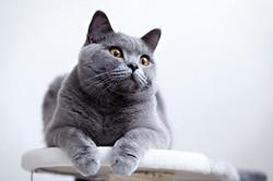 ILFC cats_0041