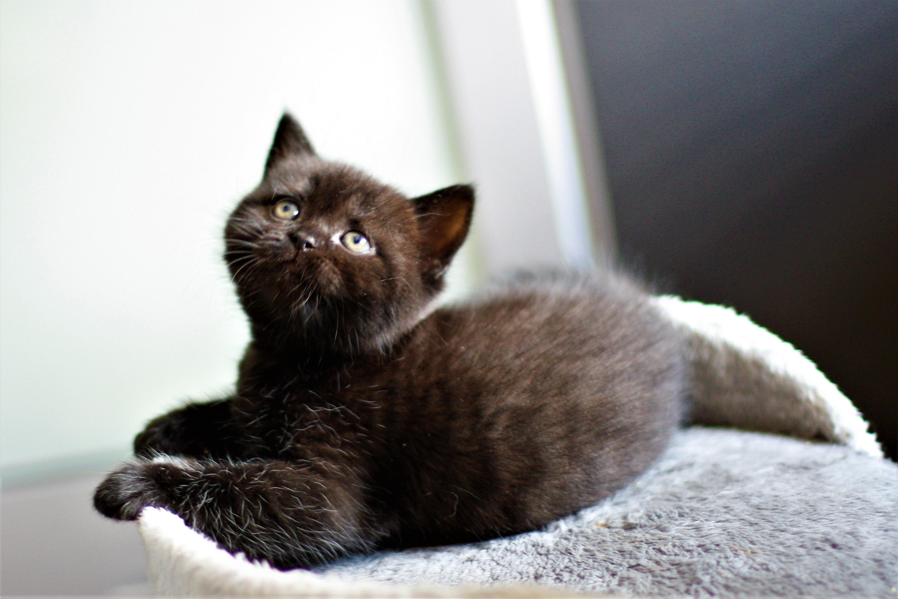 almiras kitten (18)