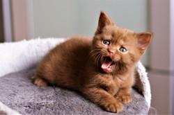 almiras kitten (12)
