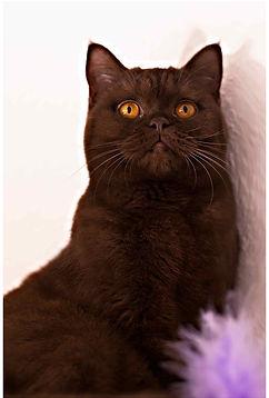 ILFC-cats_0930.jpg