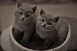Balu und Batty