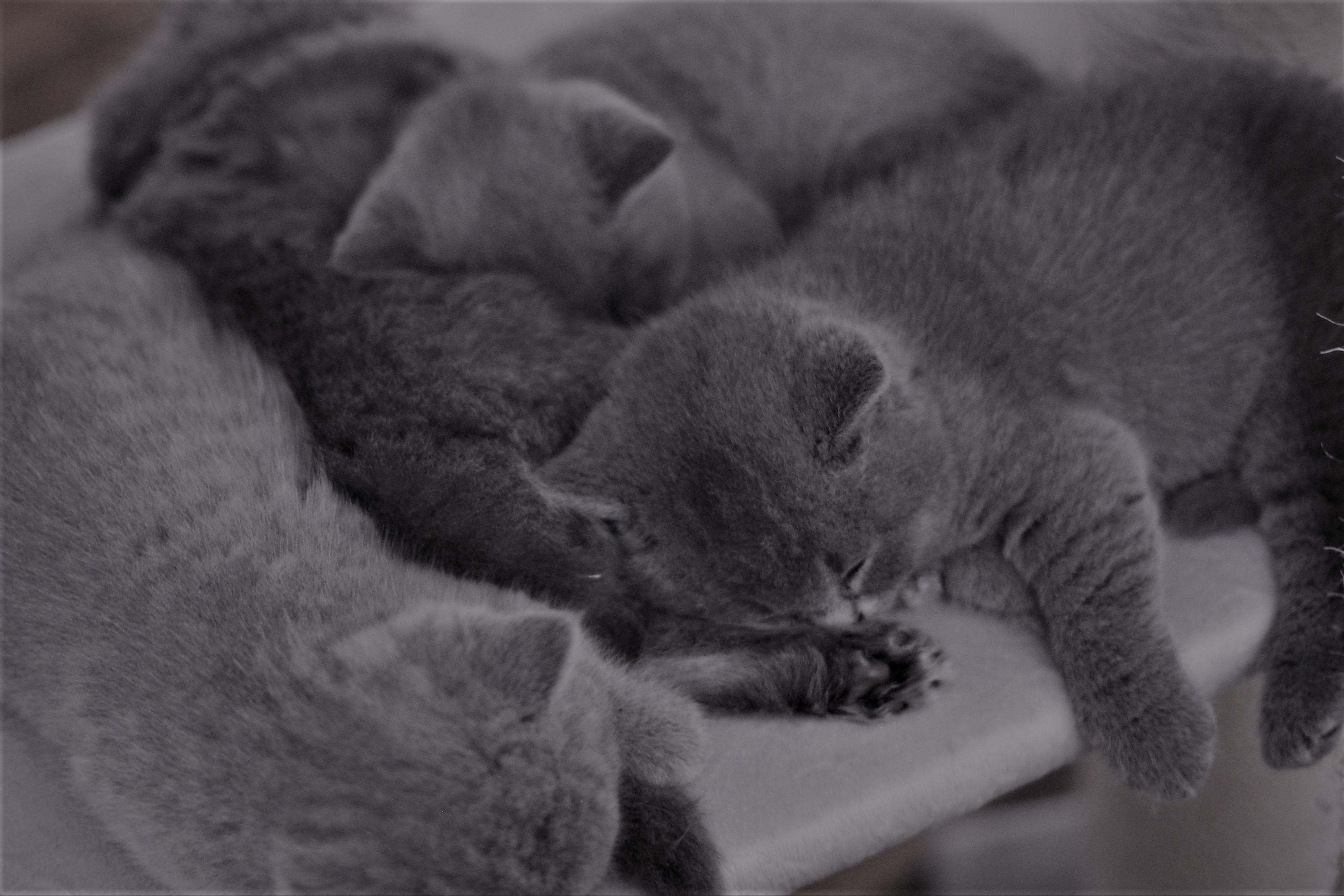 Im Schlaf...