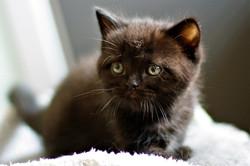 almiras kitten (21)