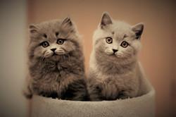 Barby+Balu