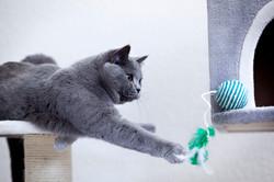ILFC cats_0051