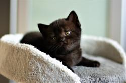 almiras kitten (3)
