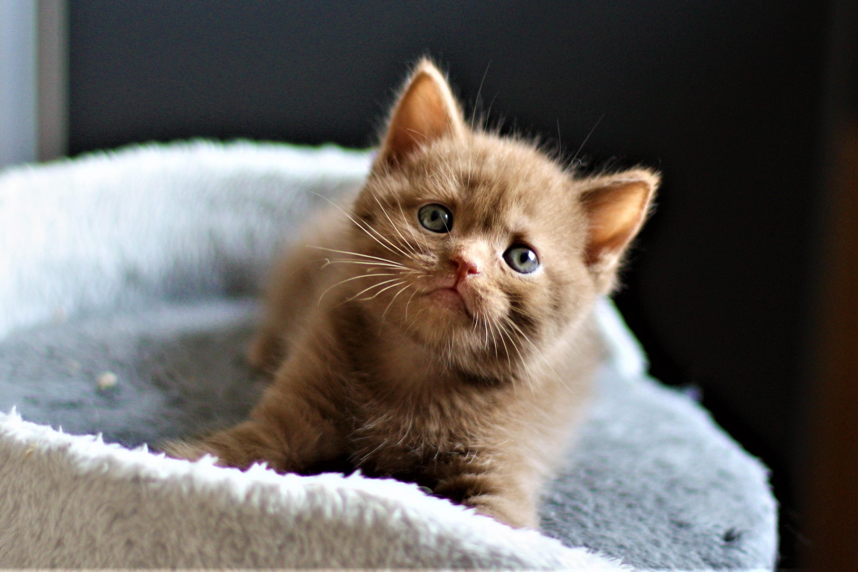 almiras kitten (7)