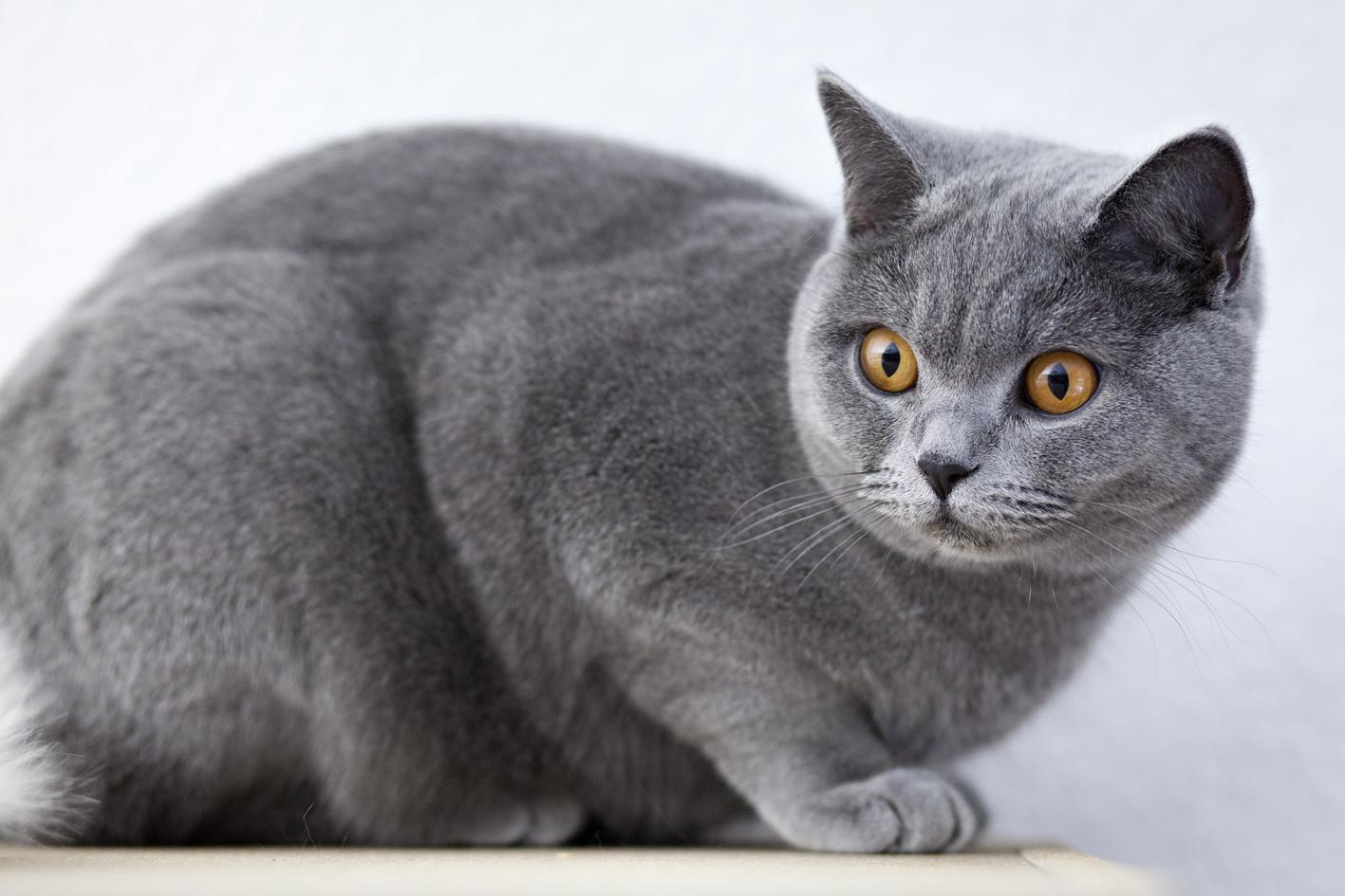 ILFC cats_0101