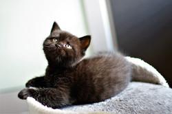 almiras kitten (22)