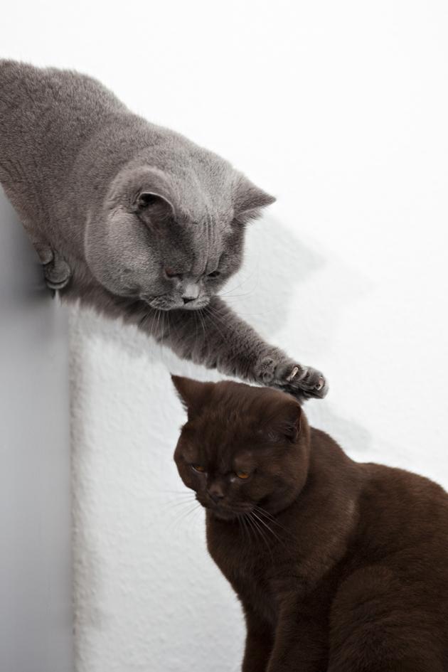 ILFC cats_0420