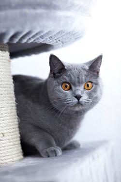 ILFC cats_0197