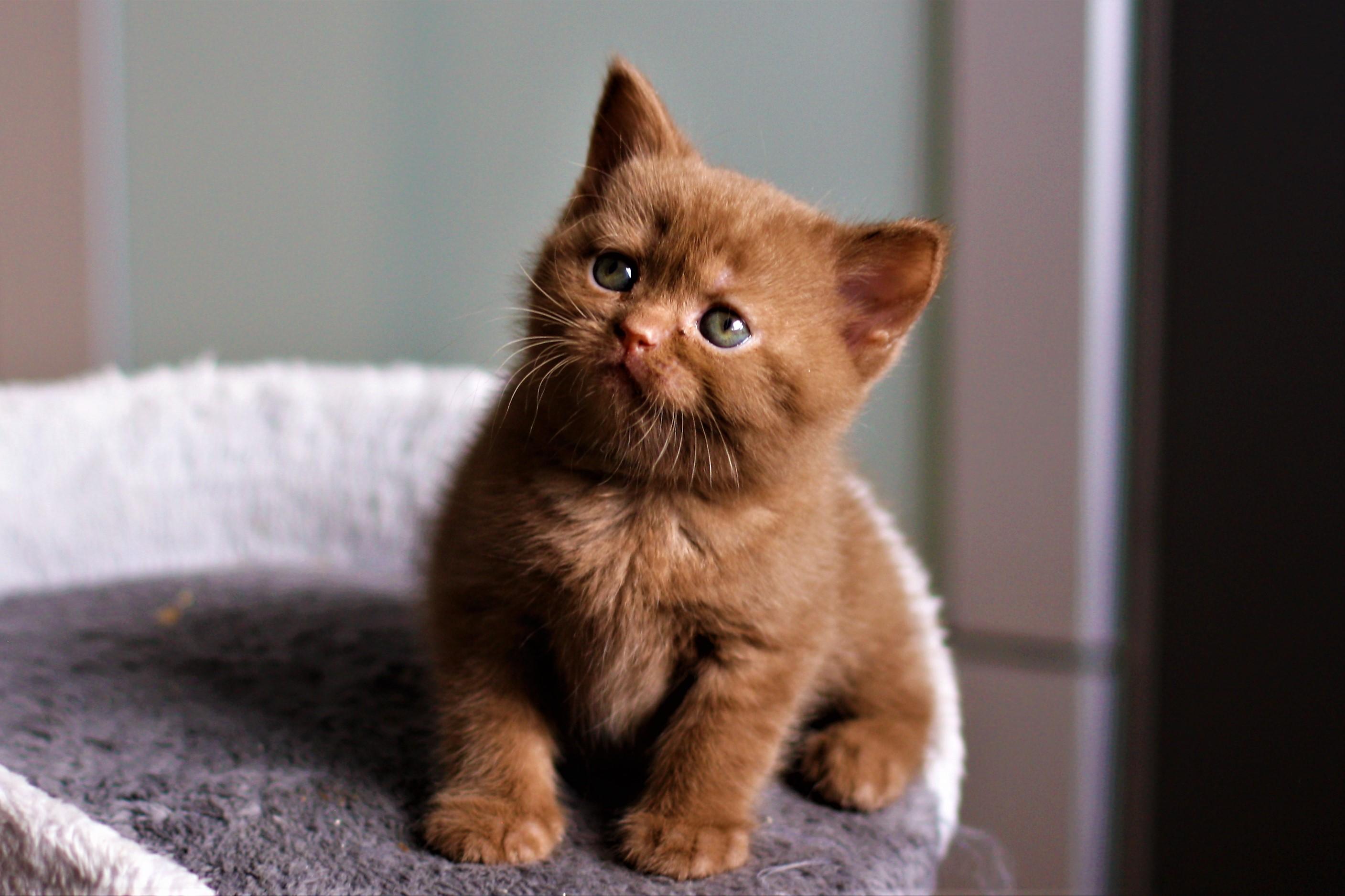 almiras kitten (10)