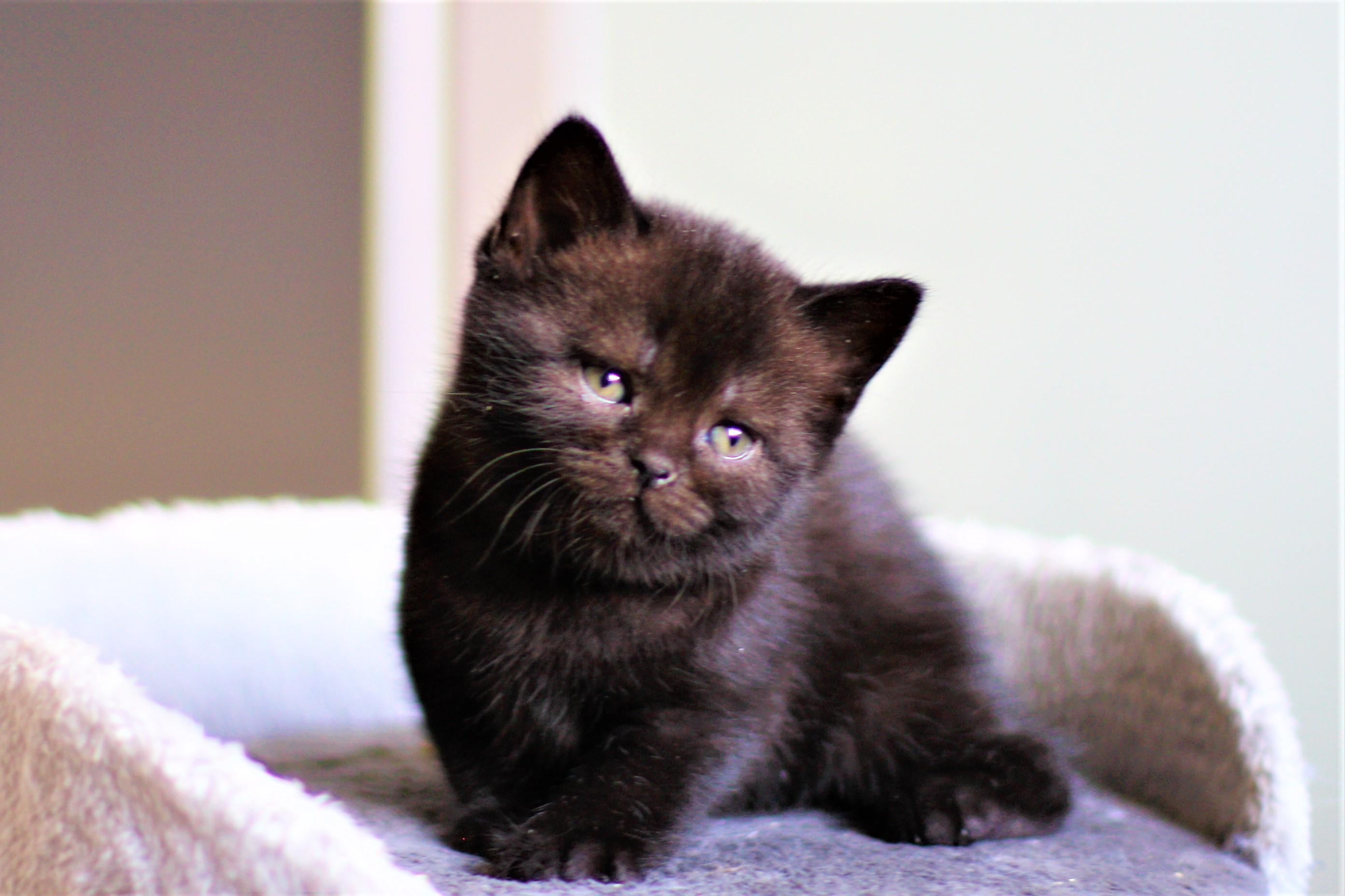 almiras kitten (6)