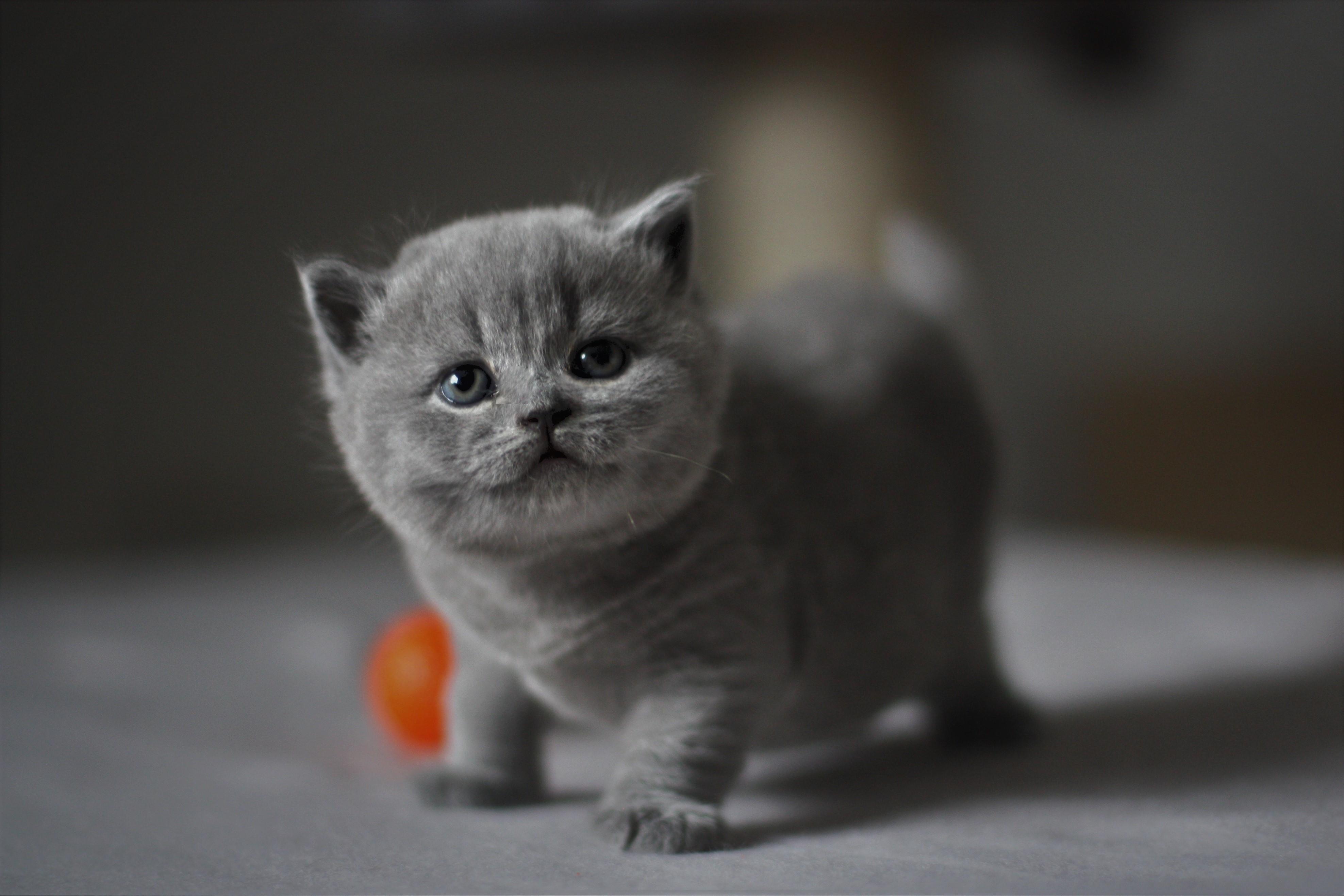 Batty vier Wochen alt