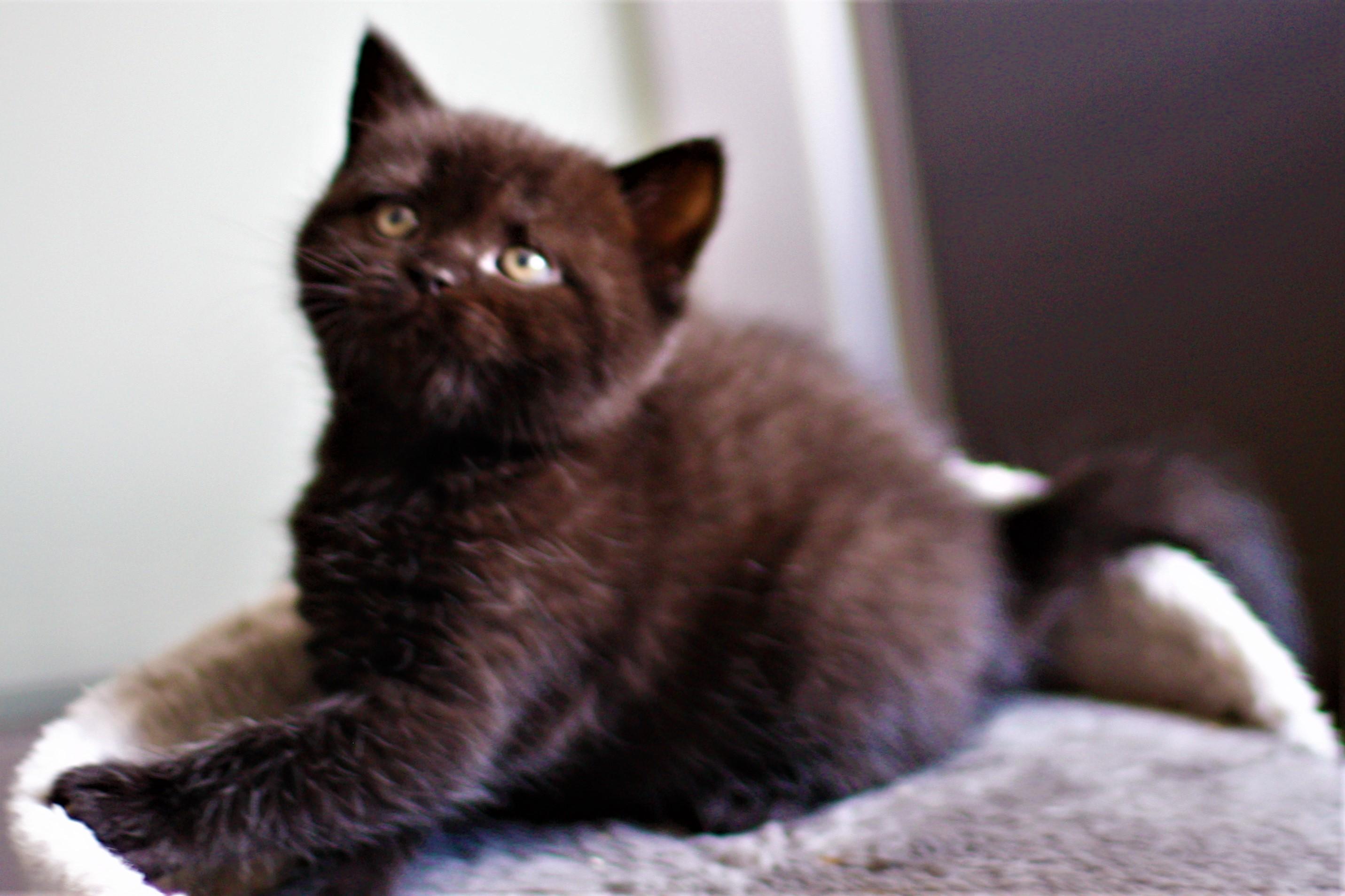 almiras kitten (23)