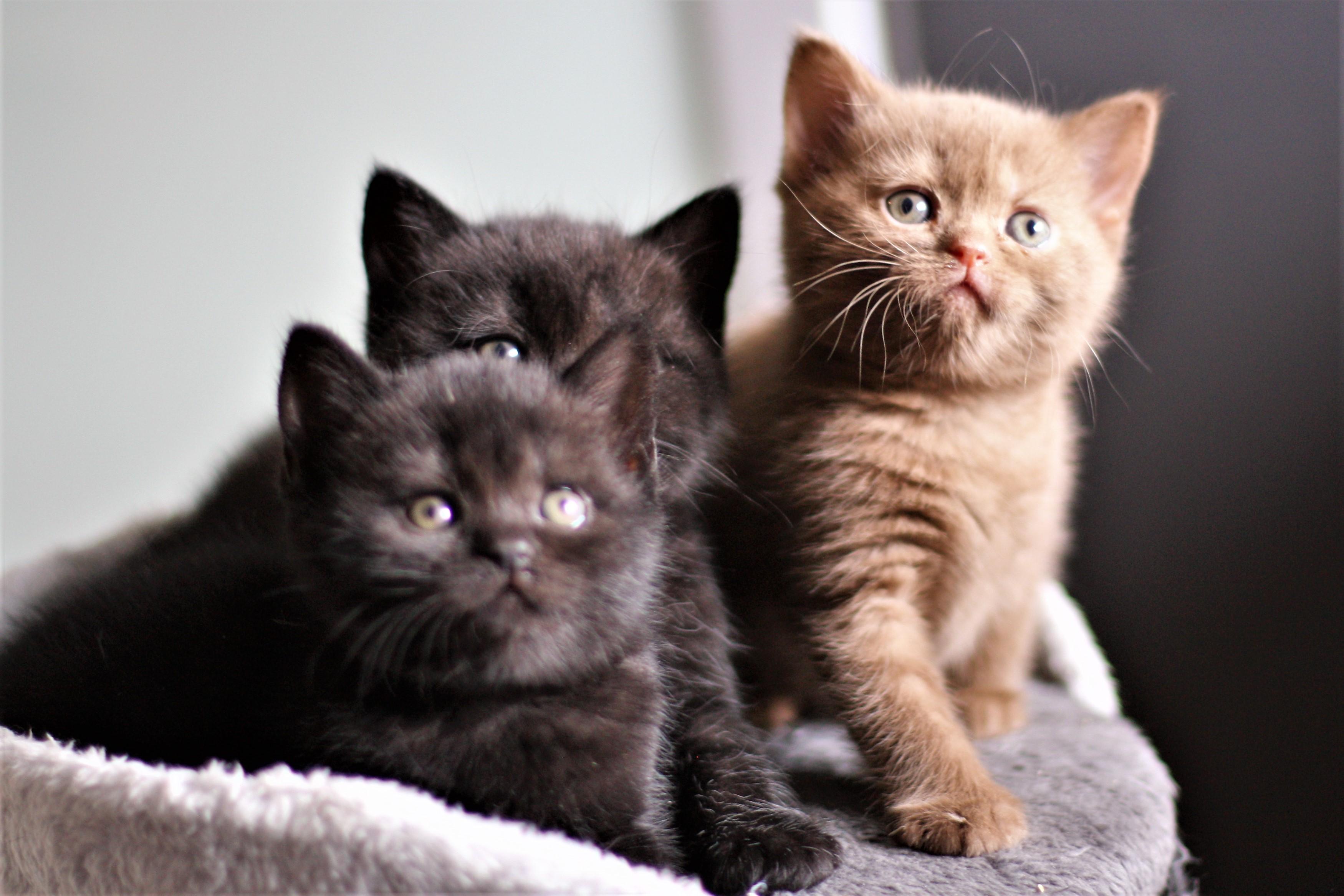 almiras kitten (25)
